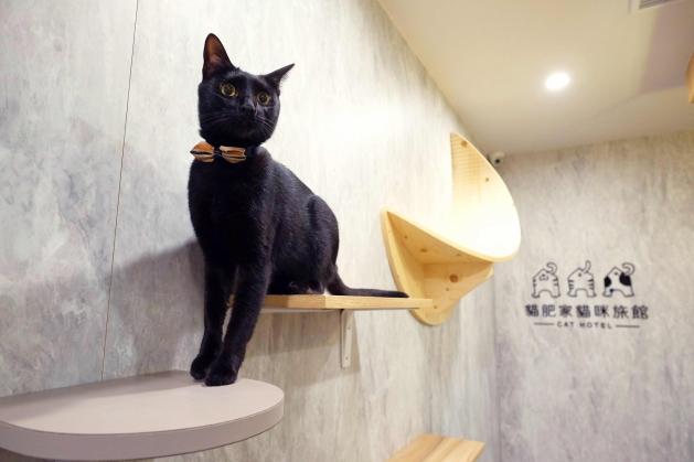 貓肥大別墅 5