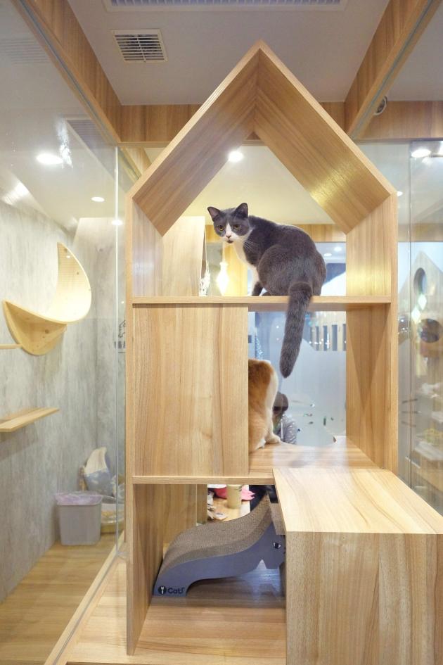 貓肥大別墅 4